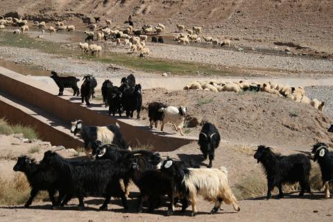 maroko_0448