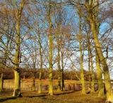last-drops-of-sun-in-richmond-park-london