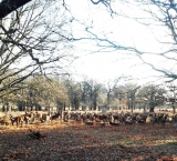 the-park-if-full-of-deer-make-sure-not-to-scare-them