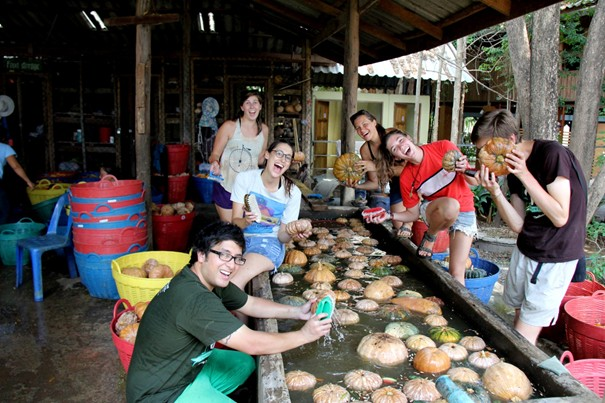 Elephant Nature park Chiang Mai - Happiness of volunteers while preparing food for elephants
