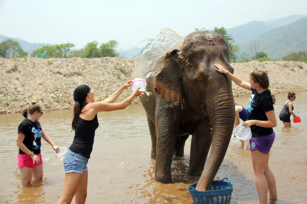 Washin and cooling elephants at the Elephant Nature park Chiang Mai