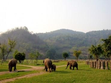 Elephant Nature Park Chiang Mai Thailand