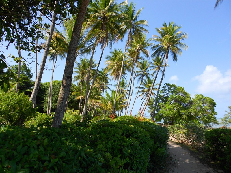 You can discover Boipeba on foot