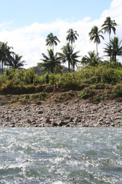 Cost of river Navua