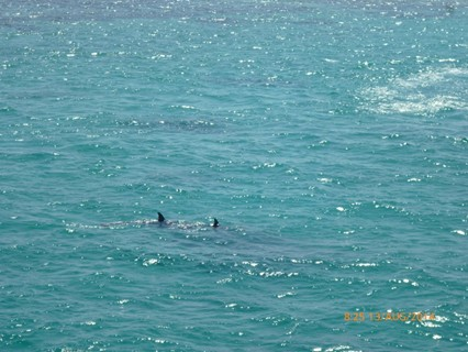 Dolphins we meet on the way to the coral reefs