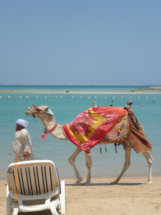 You can see camels on the beach
