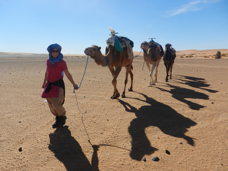 Leading the camels to the oasis
