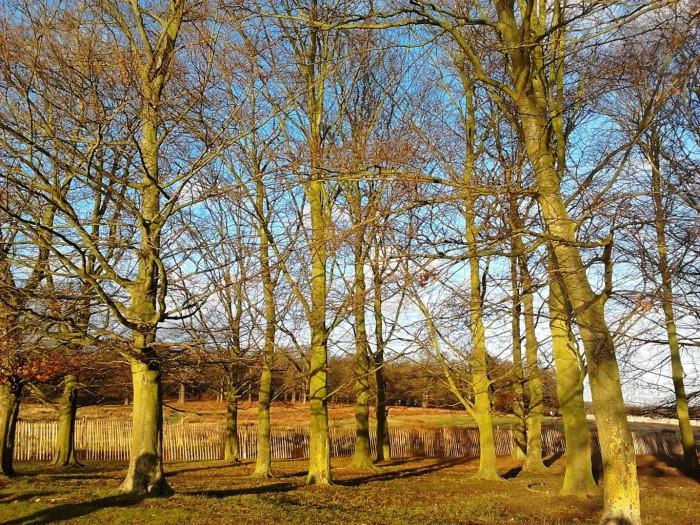 Last drops of sun in Richmond Park London