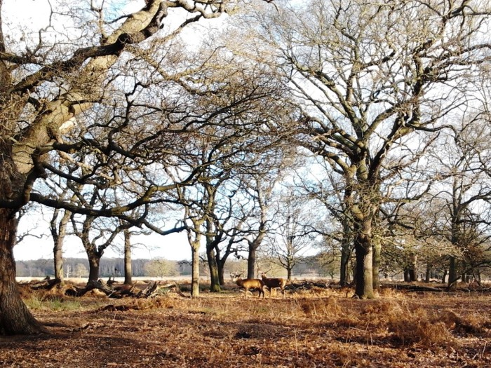 The first two deer we saw in Richmond Park London