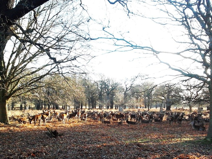 The park if full of deer; make sure not to scare them