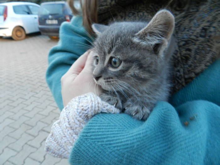 I wish/hope this kitty has a good life and is happy wherever it is.