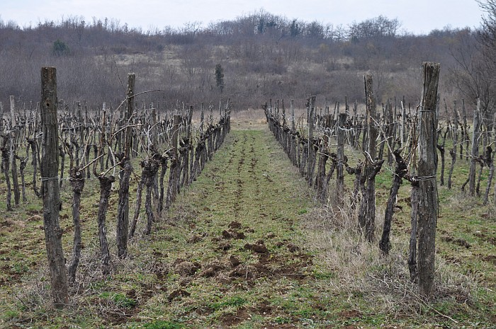 One of many magnificent wine yards - Istria Croatia