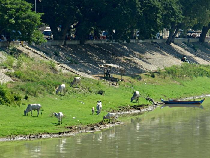 Riverside is full of surprises. Central Battambang, Sangkae River.