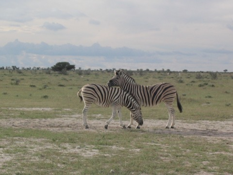 200603_namibija_0253