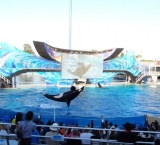 """Getting wet at the """"Shamu"""" whale show"""