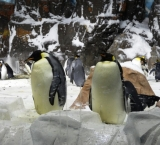 The penguins of Sea World San Diego are extremely funny