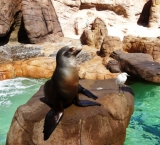 The sea lions are waiting to be fed
