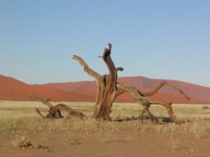 200603_Namibija_0051