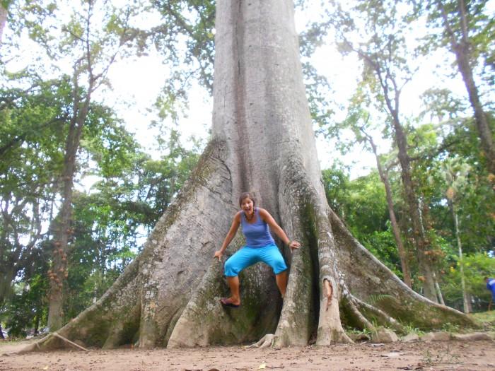 Rio botanical garden has many amazing species of trees