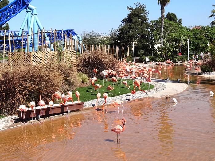 The flamingo area