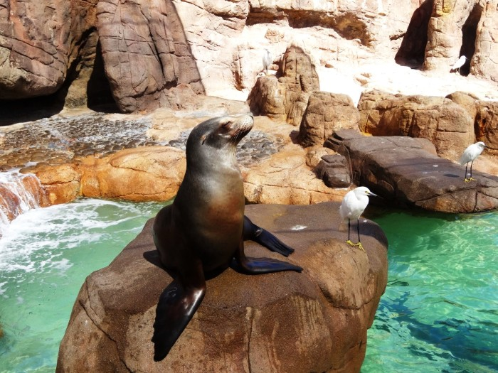 Sea World San Diego – Or How to Get Completely Wet and to Enjoy It