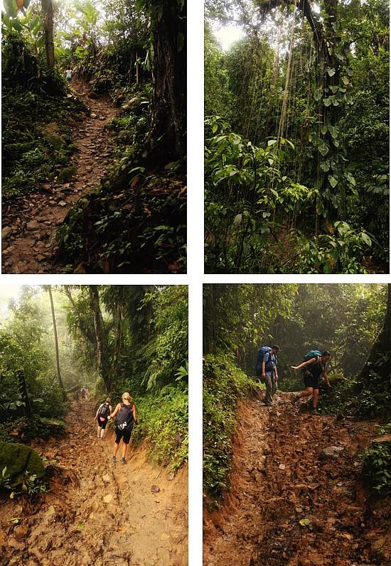 Ciudad Perdida - The Jungle