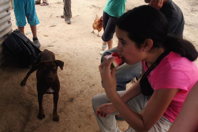 dog Josefa - here he is with Anna, eyes on the target