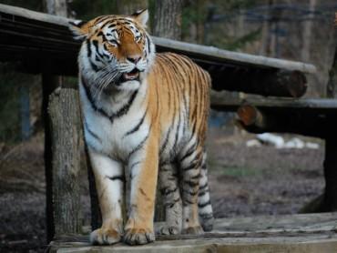 Visiting The Ljubljana Zoo