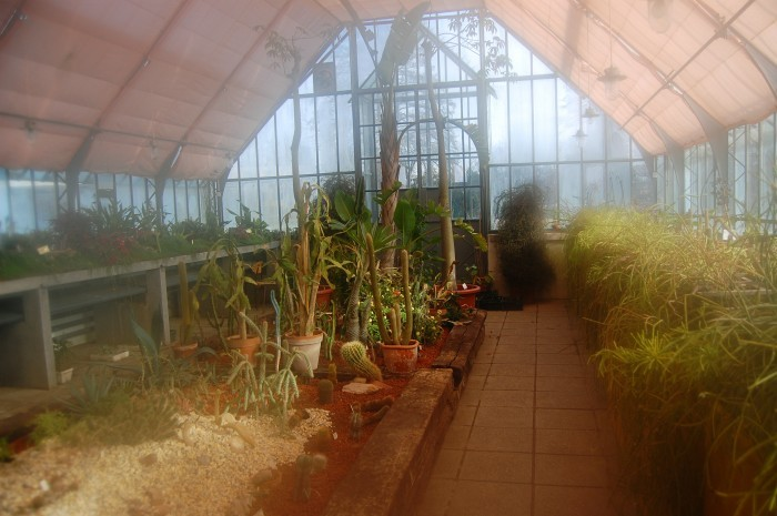 Inside the Tivoli Park Greenhouse. This photograph is extra artsy because my lens kept steaming up due to the difference in temperature inside the greenhouse. Cool photo effect, right?