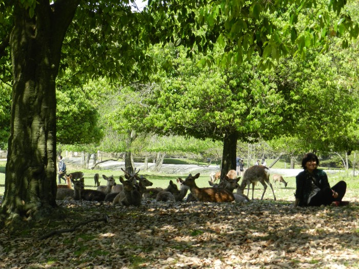 with the deers of Nara , Nara Prefecture May 2011