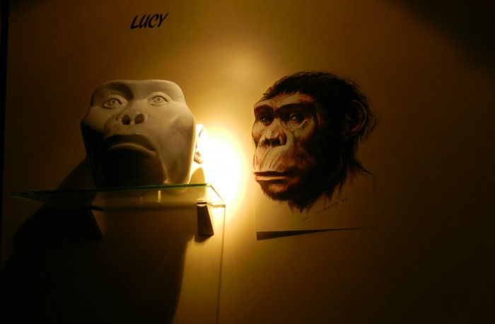 Lucy, an Australopithecus Afarensis that is estimated to have lived 3.2 million years ago, at Royal Museums for Art and History at Cinquantenaire Park.