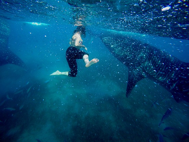 Swimming with Whale Sharks – Philippines