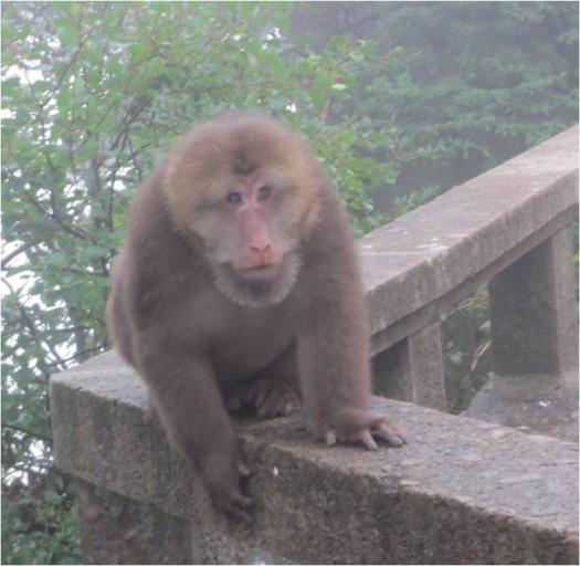 Monkey at photo shooting