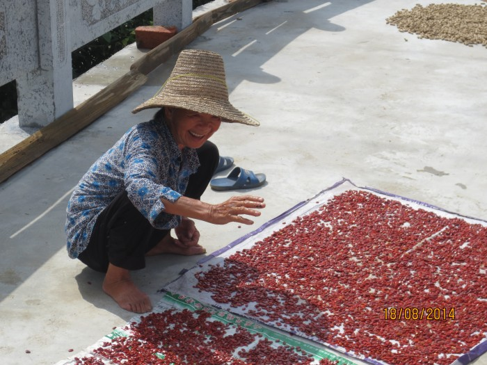 Hardworking woman with chili peppers and peanuts