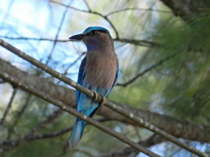 Blue winged bird