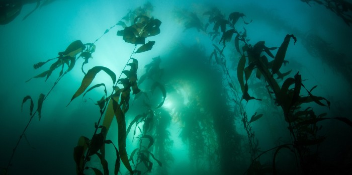 Things to do in Cape Town South Africa - Diving