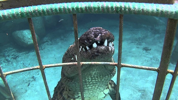 Things to do in Cape Town South Africa - Crocodile Diving