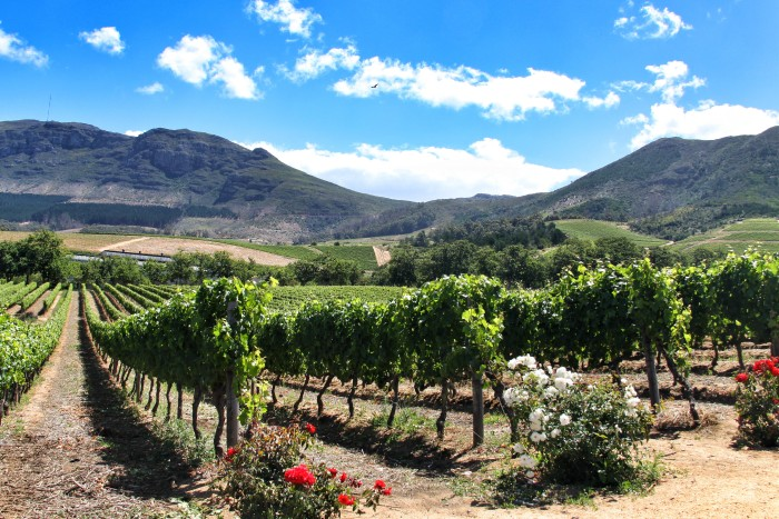 Things to do in Cape Town South Africa - Wine Tasting